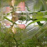 謎の小魚成長記録 Part1