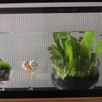 プラントグラスに水草を植えてみた