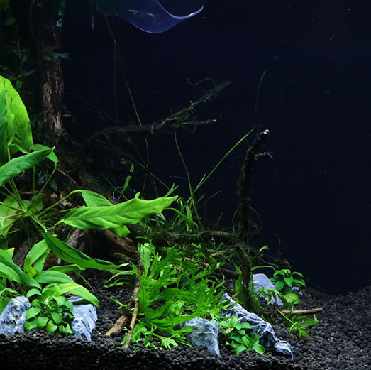 aquascape02